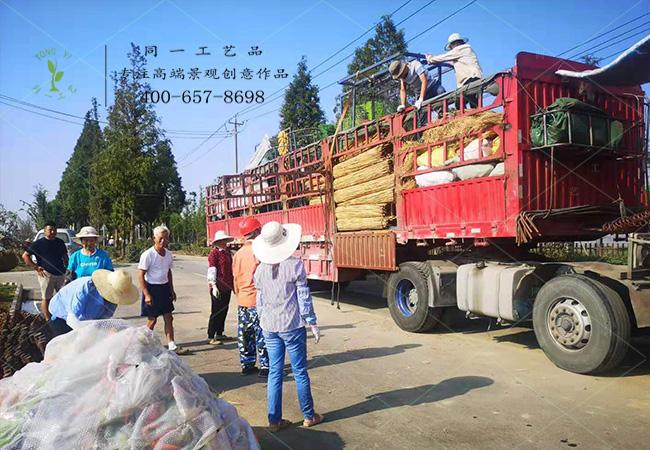 南京丰收节草雕仿真绿雕造型******车卸货